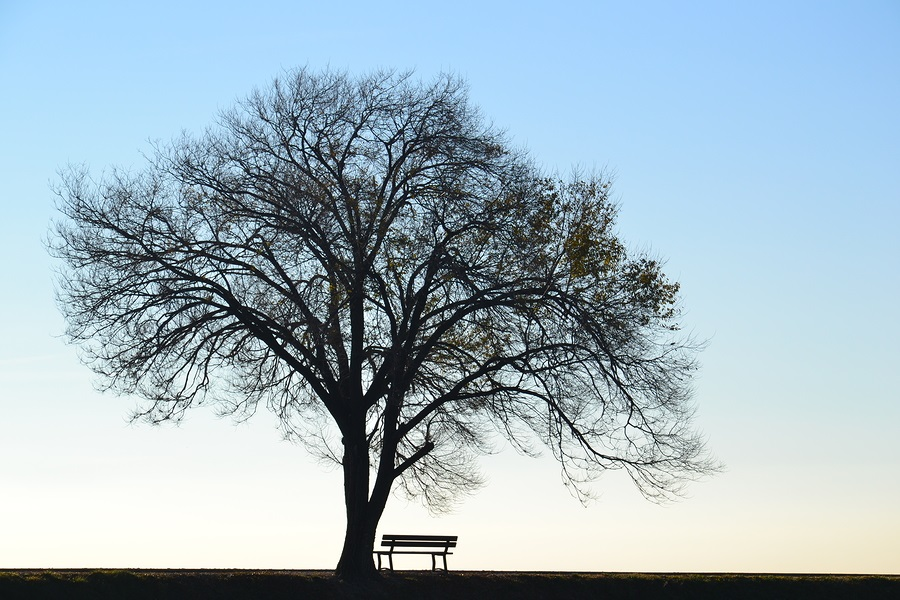 senior loneliness an empty bench under a tree
