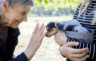 Senior Women Playing With Puppy; seniors mental health animal therapy